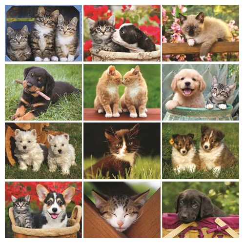 Personalized Kitten Calendar - Four Paws #810