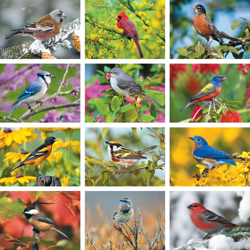 Personalized Calendar - Nature's Songbirds #875