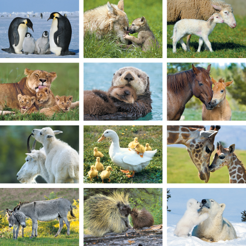 Personalized Calendar - Animal Babies #890